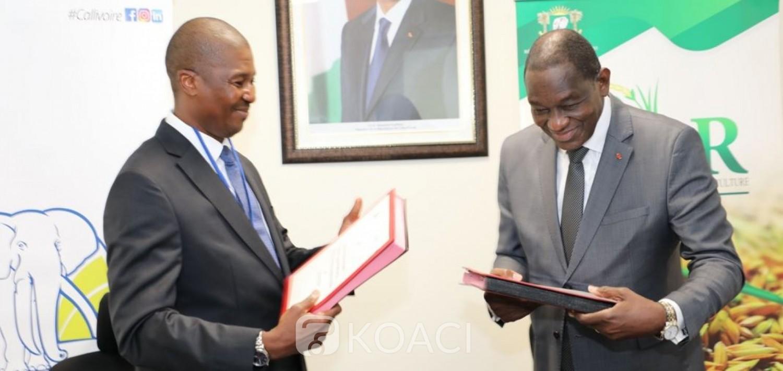 Côte d'Ivoire :RIZ, le Gouvernement signe un partenariat avec Callivoire qui annonce la création d'une ferme semencière