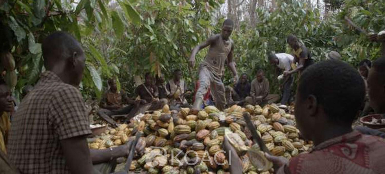 Côte d'Ivoire :   Café-cacao, les Syndicats et associations lèvent leur mot d'ordre de grève illimitée pour donner une chance aux négociations