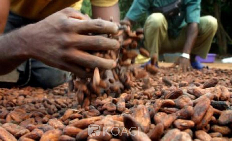 Côte d'Ivoire : Commercialisation du Cacao, le Conseil met en garde contre les acheteurs véreux