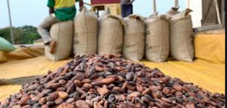 Côte d'Ivoire : « Crise »  du cacao, des Négociants locaux  souhaiteraient que le régulateur  mettre fin au monopole des multinationales pour favoriser la transformation locale