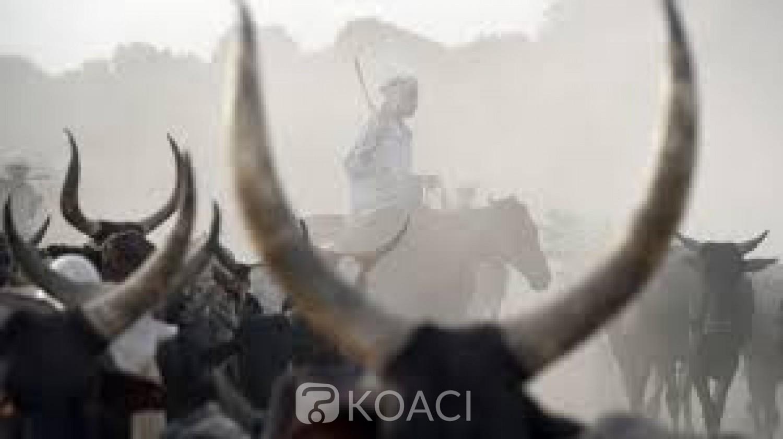 Tchad : 35 morts dans des affrontements entre éleveurs et agriculteurs dans le sud