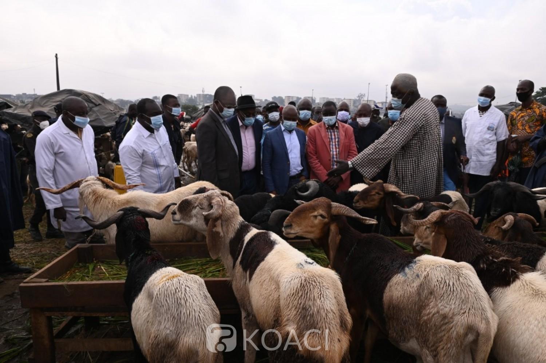 Côte d'Ivoire :    Célébration de la fête de la Tabaski 2021, plus de 2 milliards de CFA de bêtes importées au Burkina et au Mali