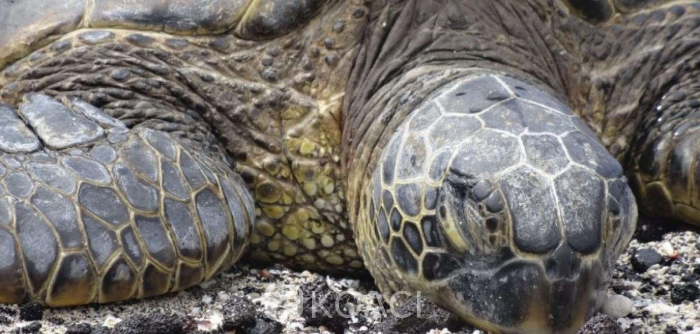 Madagascar : Ils mangent une tortue de mer, 19 morts dont neuf enfants