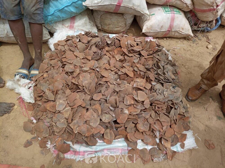 Cameroun : Au moins 4 tonnes d'écailles de pangolin saisies au nord du pays