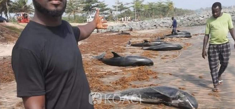 Ghana :  Vagues de dauphins et poissons échoués sur trois plages