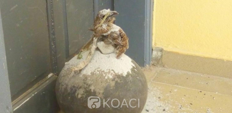Côte d'Ivoire : Découverte d'un canari maculé de sang d'oiseau, les enseignants  exigent un désenvoutement des religieux avant la reprise des cours