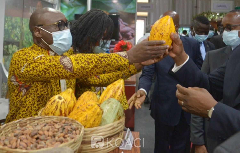 Côte d'Ivoire : Face aux difficultés rencontrées par les exportateurs et transformateurs ivoiriens de café et de cacao, le Gouvernement leur attribue 20% des exportations de fèves