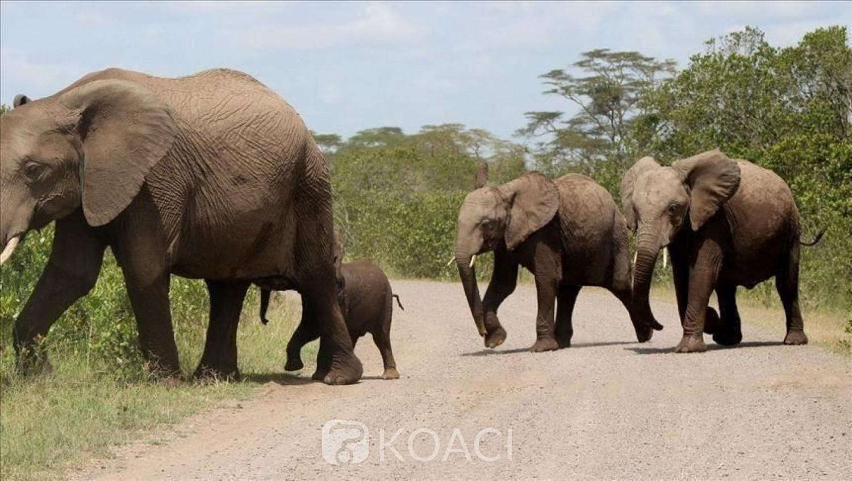 Côte d'Ivoire :   Zaranou, la SODEFOR assure que la forêt classée de Bossématié est sous le contrôle de ses agents et annonce le retour des chimpanzés et des éléphants