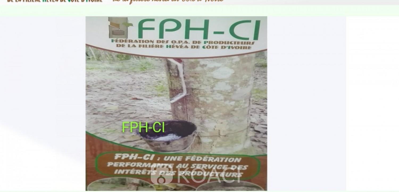 Côte d'Ivoire :    La Fédération des organisations professionnelles agricoles des producteurs de la filière hévéa, annonce un résultat net positif de 211.203.800 FCFA