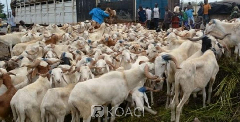 Côte d'Ivoire : Tabaski 2021, le CNLVC sur le terrain pour sensibiliser et lutter contre les pratiques anormales dans la filière bétail-viande