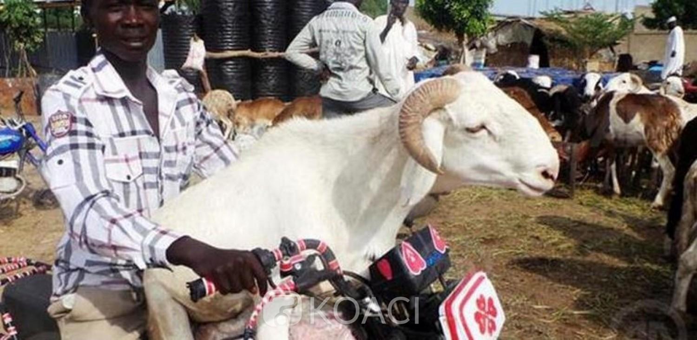 Côte d'Ivoire :   Tabaski 2021, la fête du mouton annoncée pour le 20 juillet prochain