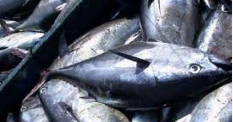 Côte d'Ivoire : Pénurie du « Faux thon » sur les marchés, les précisions   du Port Autonome d'Abidjan (PAA)