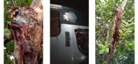 Côte d'Ivoire : Après l'impact reçu par un car sur l'axe Bouaké-B...
