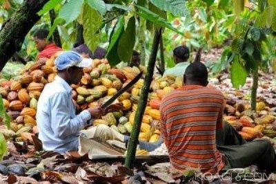 Côte d'Ivoire : Insécurité dans les zones de  production  du  cacao, huit operateurs tués et un préjudice financier de 1,2 milliards FCFA en trois mois
