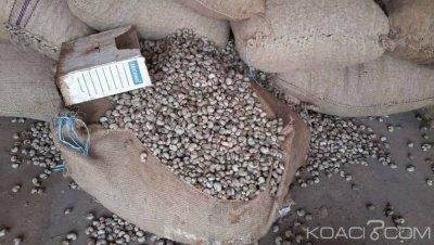 Côte d'Ivoire : Campagne commerciale d'anacarde,  le prix du Kg fixé à 375 FCFA, une chute de 125 FCFA par rapport à l'année dernière