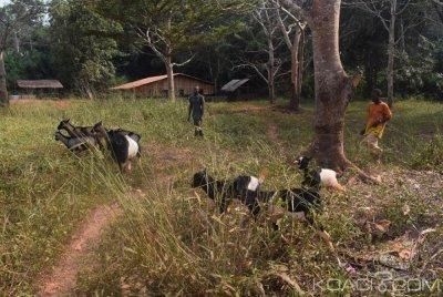 Cameroun : Les pygmées marginalisés et sans papiers encouragés  à faire l'élevage