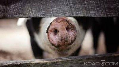 RDC:  La viande de porc en provenance de l' UE désomais interdite