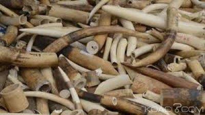 Zimbabwe : Un ancien  maire arrêté en possession de 120 kg de défenses d'éléphants