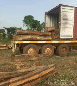 Côte d'Ivoire : A Didiévi, deux containers de trafic illicite  de bois de vène saisis