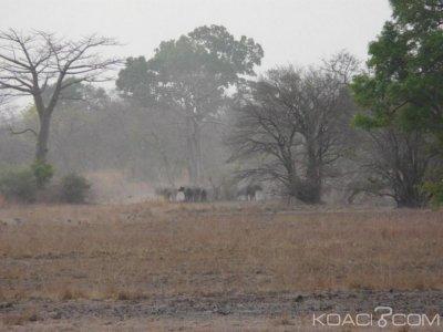 Bénin:  Disparition de deux touristes français partis en balade dans un parc au nord