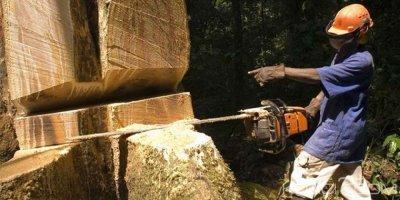 Gabon : Des proches d'Ali Bongo suspectés d'avoir volé 353 conteneurs de Kevazingo