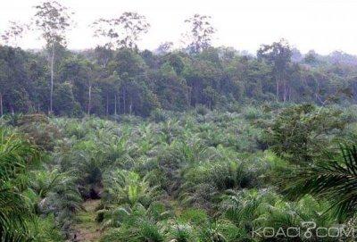 Cameroun: Exploitation de l'huile de palme, dix associations assignent en France un industriel en justice
