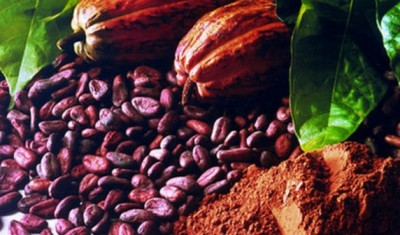 Ghana: Le COCOBOD dément des rapports d'absence d'acheteurs pour le cacao ghanéen