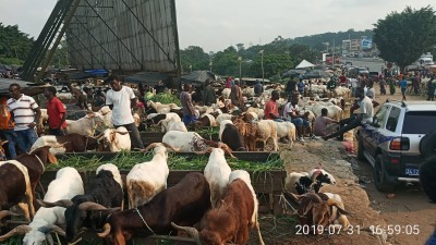 Côte d'Ivoire: Célébration de la Tabaski 2019, la date connue demain, le prix du mouton abordable en ce moment sur le marché