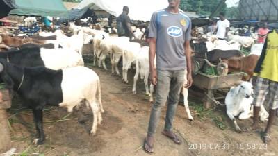 Côte d'Ivoire :   L'Aïd-el-Kébir célébrée le dimanche 11 Août 2019, la communauté musulmane a entamé aujourd'hui, un jeûne non obligatoire de 9 jours