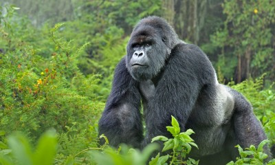 RDC: Un éco-garde abattu par des rebelles dans  le célèbre parc de Kahuzi-Biega