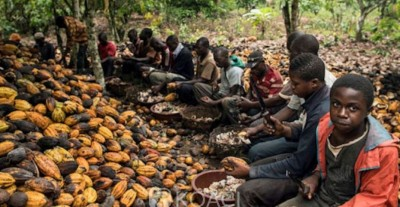 Côte d'Ivoire: Washington  envisagerait  un projet d'interdiction du  cacao en provenance d'Abidjan
