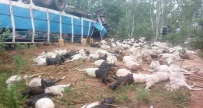 Burkina Faso: Deux personnes décédées et plusieurs dizaines de béliers tués dans un accident de circulation