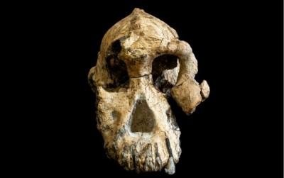 Ethiopie: Découverte d'un crâne d'Australopithèque, vieux d'environ 3,8 millions d'années