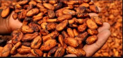 Côte d'Ivoire : La  plus importante usine de broyage de fèves de cacao au monde va ouvrir ses portes dans le  pays
