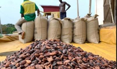 Côte d'Ivoire: Information  sur le prix du cacao  fixé à 1000 FCFA, le Conseil dénonce une spéculation
