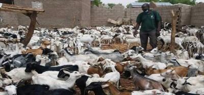 Cameroun: Une campagne nationale de vaccination contre la peste, au moins 6 millions de petits ruminants concernés