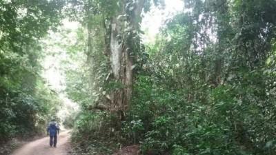 Côte d'Ivoire: Métro d'Abidjan, 25 hectares du parc du Banco seront détruits pour la mise en œuvre du projet