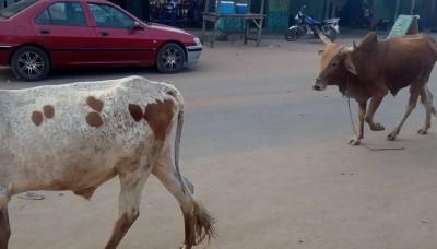Côte d'Ivoire: À Zuenoula, à quatre ils tentent de voler un mouton, l'un  des présumé...