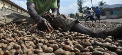 Côte d'Ivoire: Contrebande de noix de cajou, Gon révèle une perte fiscale de 17 milliards pour l'Etat