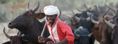 Tchad : Pour rembourser sa dette  de 100 millions de dollars, le Tchad propose des vaches à l'Angola