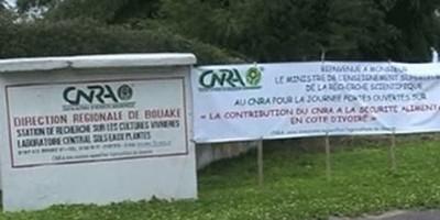 Côte d'Ivoire : Affaire Abadjin-Doumé et d'Abadjin-Kouté de nouvelles révélations qui pourraient accabler le CNRA toujours dans son « mutisme  »