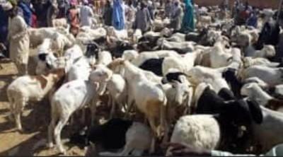 Burkina Faso : Tabaski, interdiction de vente d'animaux en dehors des marchés  et espaces autorisés