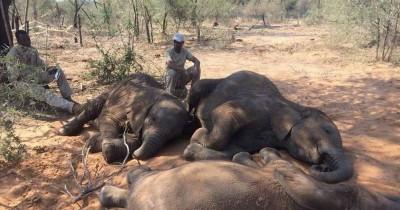 Zimbabwe : Mort mystérieuse de 22 éléphants, une bactérie « suspectée»