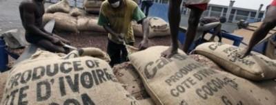 Côte d'Ivoire : Filière café-cacao, un différend opposerait  le Conseil et les multinationales ?