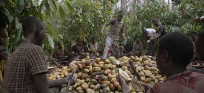 Côte d'Ivoire :   Café-cacao, les Syndicats et associations lèvent leur mot d'ordre d...