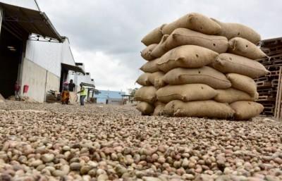 Côte d'Ivoire :  Cajou, la campagne commerciale s'ouvre le 5 février, prix plancher bord champ fixé à 305 FCFA, en baisse de 95 FCFA