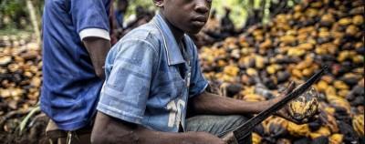 Côte d'Ivoire : Les 7 géants du cacao ivoirien en justice aux USA pour exploitation d'enfants