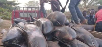Ghana :  Recherche des dauphins échoués, vente et consommation interdites