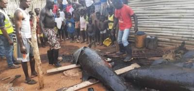 Togo : Alerte sur la consommation des dauphins échoués au Ghana