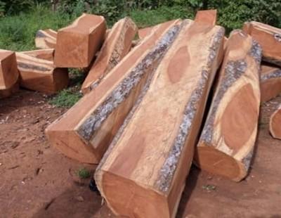 Côte d'Ivoire : Affaire disparition 40 conteneurs de Bois de Vêne d'une valeur de 700 millions à San-Pédro,  les précisions du ministère des eaux et forêts
